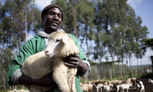 A man in Kenya holds a sheep